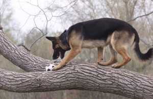 Altadore dog park in the tree